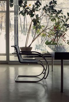 View of the Villa Tugendhat´s by Mies van der Rohe) winter garden - and cantilever chair Ludwig Mies Van Der Rohe, Bauhaus, Decoracion Vintage Chic, Cantilever Chair, Building Images, Modern Architects, Ivy House, Mid Century House, Mid Century Modern Design