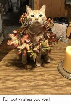 20 Cute and Funny Animal Fall Pictures You'll Love More than PSL #fallmemes #cutememe #cuteanimals #funnyanimals #animalmemes Haha Funny, Funny Dogs, Funny Memes, Fall Pictures, Cute Pictures, Fluffy Animals, Cute Animals, Fall Cats, Fall Memes