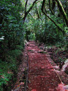 Marangu Route - Mount Kilimanjaro - Tanzania