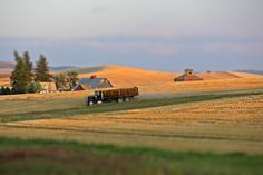 Wheat truck, the Palouse, Washington