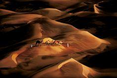 Alors que le soleil se couche sur la région de Liwa (Abu Dhabi), des hommes appartenant à des tribus locales guident leurs chameaux vers une zone de pâturage voisine, en Arabie saoudite. Les mouvements du sable créent d'immenses dunes en forme de croissant, qui avancent lentement et peuvent atteindre 150 m de haut - National Geographic France