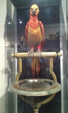 Fawkes - The healing bird