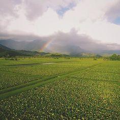 The taro fields of Hanalei, Kauai - in all its glory! : @brycejohnson #luckywelivehawaii #hanalei