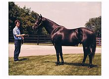 J O Tobin(1974)Never Bend- Hill Shade By Hillary. 3x4 To Eclair, 5x5 To Selene. 21 Starts 12 Wins 2 Seconds 2 Thirds. $659,416. Won 1977 Swaps(G1), Californian(G1). Died In 1994.