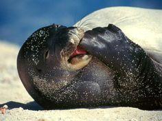 hawaii animals | under new Hawaii law by Derek Paiva | HAWAII Magazine | Hawaii ...