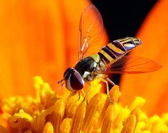 130+ Stunning Examples of Macro Photography - Tuts+ Photo & Video Article