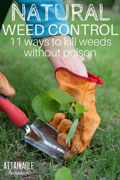 Natural weed killers and other weed control methods can be hit or miss. Here's what works (and what's less than stellar) at keeping weeds at bay. From weed barriers to natural weed killers in a spray bottle, these are some of the methods that I've tried with varying levels of success to control invasive weeds. #garden #homestead #greenerliving