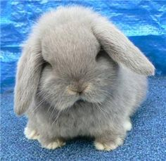 """This. Is. Adorable. This bunny is so fluffy it has to be pronounced """"floofy"""" to describe it's full cuteness."""