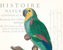 Vintage French Parrot Collage No. 10 - Giclee Art Print - Nautical Art - Beach Cottage Decor - Coastal Decor - Natural History Wall Art