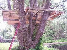 1000 images about tree house ideas on pinterest for House framing 101