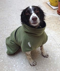 "Customer Kathleen thinks this dog drying coat is ""Ultimate Coat Heaven"". She emailed us this lovely pic of her dog today and said ""Nellie is all snuggled in her fabulous new ultimate drying coat after our morning walk in the very wet fields. This coat has blown us away, it is brilliant."" http://www.dfordog.co.uk/microfibre-towelling-dog-drying-coat.html"