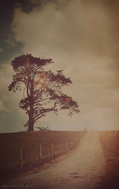 love. Cally Whitham's Photography will make you Remember your Rural Links! (22)