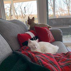 Chapichapochatpapo encore un nouveau chat blanc ! Son Chat, Bean Bag Chair, Cats, Top, Furniture, Home Decor, Cat Love, Midget Cat, Best Relationship