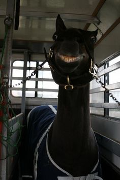 Gets better the longer you look at it! Look at that toothy grin! He's up to no good!