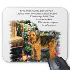 http://rlv.zcache.ca/welsh_terrier_art_gifts_mouse_pad-re4cf9295dc22479d9af20c1efc4ca934_x74vi_8byvr_512.jpg