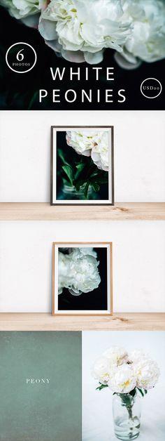 White Peony Stock Photos - 6 by Petra Veikkola on @creativemarket