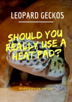 setting up a leopard gecko tank can be hard if you are a beginner rh pinterest com Gardner Multiple Intelligence Learning Styles