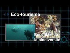 Vidéo officielle de l'Année internationale de la biodiversité 2010.
