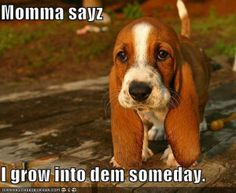 If dogs could talk what would they say . . wriitng an essay.?