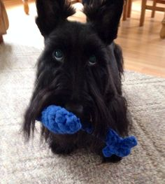 Wanna throw it?  ~ Lucy.   Love the eyes-JSM