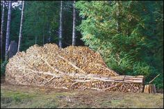 Google Afbeeldingen resultaat voor http://img136.imageshack.us/img136/3248/houtenboomdk1.jpg