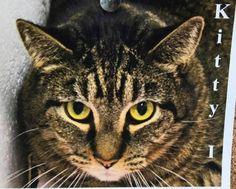 Meet Kitty I TOHCS@LittleShelter.com (631) 651-9788