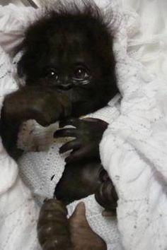 Zhoozhoo Claire Taylor Orangutan Newborn Full Body Soft
