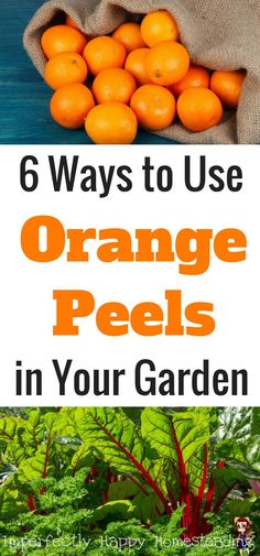 6 Ways to Use Orange Peels in Your Garden. Great for backyard homesteads, hobby farms and vegetable gardeners.