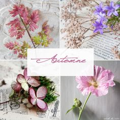 Automne | odile lm (using Barb Brookbank's template)