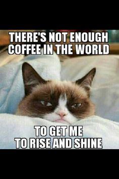 Haha. Some mornings...