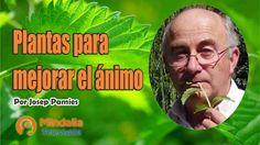Plantas para mejorar el ánimo por Josep Pamies