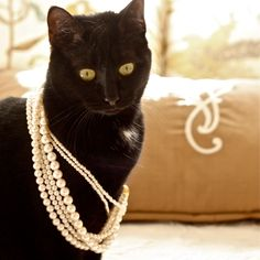 "Le chat noir. -- [REPINNED by All Creatures Gift Shop]  My mother always used to say, ""Pearls are the only jewelry to wear with basic black.""  She was right, LOL."