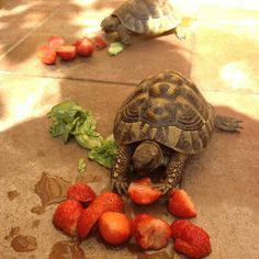 OH!  They DO love strawberries, broccoli, melons and their rinds.
