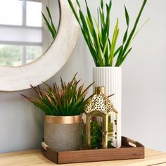 Furniture Stores In Chicago Planter Pots, Lamp Ideas, Table Decorations, Furniture Stores, Plants, Gold, Chicago, Home Decor, Homemade Home Decor