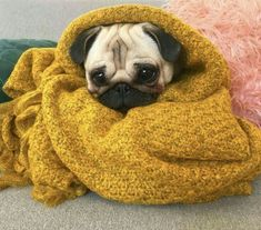 """Acquire great pointers on """"pugs"""". They are actually offered for you on our web site. Animals And Pets, Baby Animals, Cute Animals, Images Kawaii, Baby Pugs, Pug Pictures, Pug Puppies, Cute Pugs, Dog Barking"""