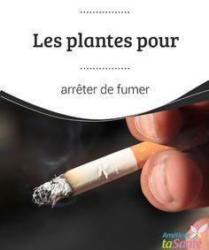 Les plantes pour arrêter de fumer Pour arrêter de fumer, vous devriez avoir recours aux plantes. Il s'agit d'une méthode douce et naturelle qui pourrait bien vous suprendre ! Stop Cigarette, Stop Smoke, Cancer, Health Fitness, Healing, Medical, Nutrition, Science, Motivation