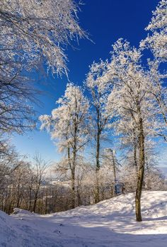 Stock image of 'Trees on the Uetliberg mountain in Zurich - Switzerland'