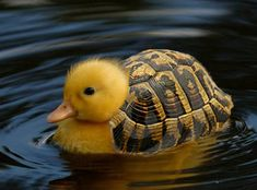 TURTLEDUCK!!! ^_______^    See? Didn't that make your day better?