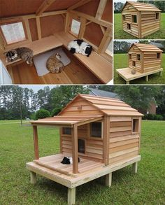 Cats Toys Ideas - Luxurious Outdoor Cat and Dog Homes For Your Furry Friends! get some yourself some pawtastic adorable cat shirts, cat socks, and other cat apparel by tapping the pin! - Ideal toys for small cats