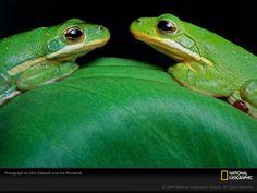 La vida En Color Verde [Hermoso] - DE NAT. GEO