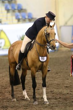 Cheval de Luxe [X] [Champion de Luxe x Dancing Flower/Dressman I] 2004 German Riding Pony stallion GERMAN & DUTCH RIDING PONIES