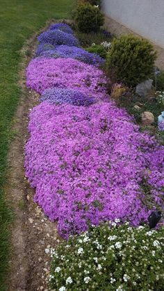 F Drought Resistant Plants, Garden Landscaping, Home And Garden, Exterior, Landscape, Outdoor Decor, Growing Plants, Front Yard Landscaping, Scenery