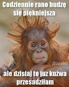 Piekniejsza Memes Humor, Man Humor, Jokes, Weekend Humor, Some Quotes, Morning Quotes, Funny Images, Good Morning, Quotations