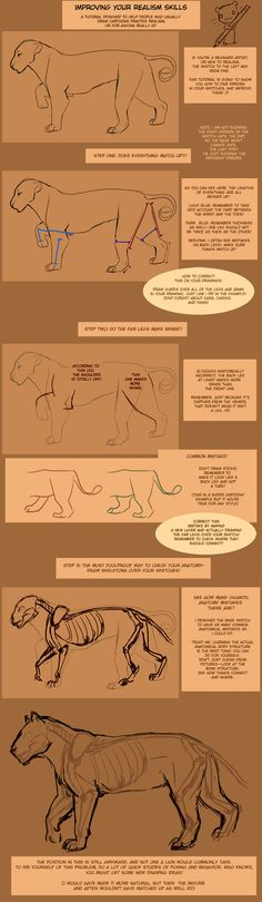 Improving Anatomy Tutorial by *TamberElla on deviantART