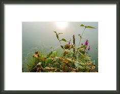 Small Wonders of Life Framed Print by Ismo Raisanen Prints For Sale, Art For Sale, Framed Art, Framed Prints, Small Wonder, Hanging Wire, Art Market, Fine Art America, My Arts