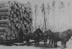 The Land We Cared For.A History of the Forest Service's Eastern Region (Chapter Us Forest Service, Horse Drawn, Sled, Minnesota, Homeschool, Construction, Horses, History, Pictures
