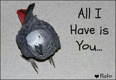 ♥This is a reminder that all bird owners need to think about each day...