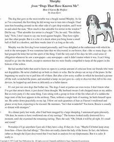 my favorite dog essay