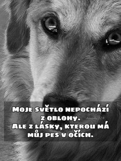 Motto, Animals And Pets, Quotations, Best Friends, Memes, Dogs, Quotes, Inspiration, Quotation