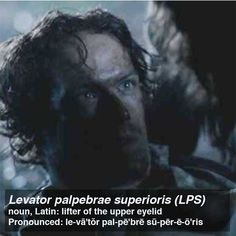 palpebrae superioris (LPS) Posted by Outlander Anatomy
